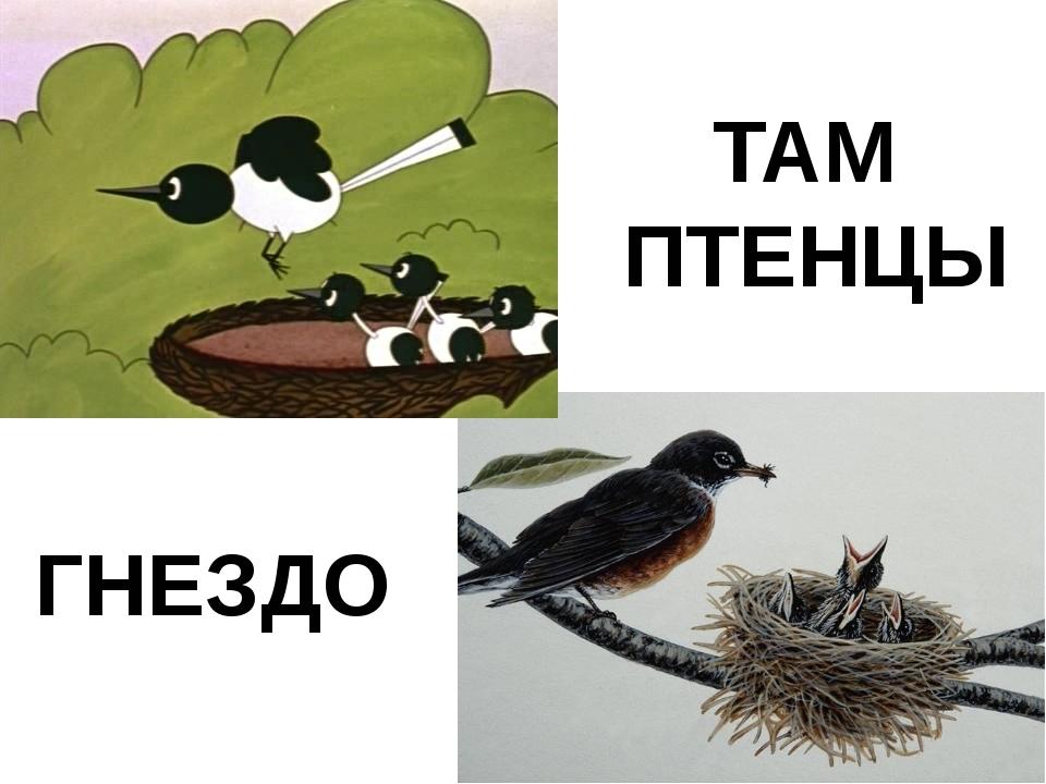 ГНЕЗДО ТАМ ПТЕНЦЫ