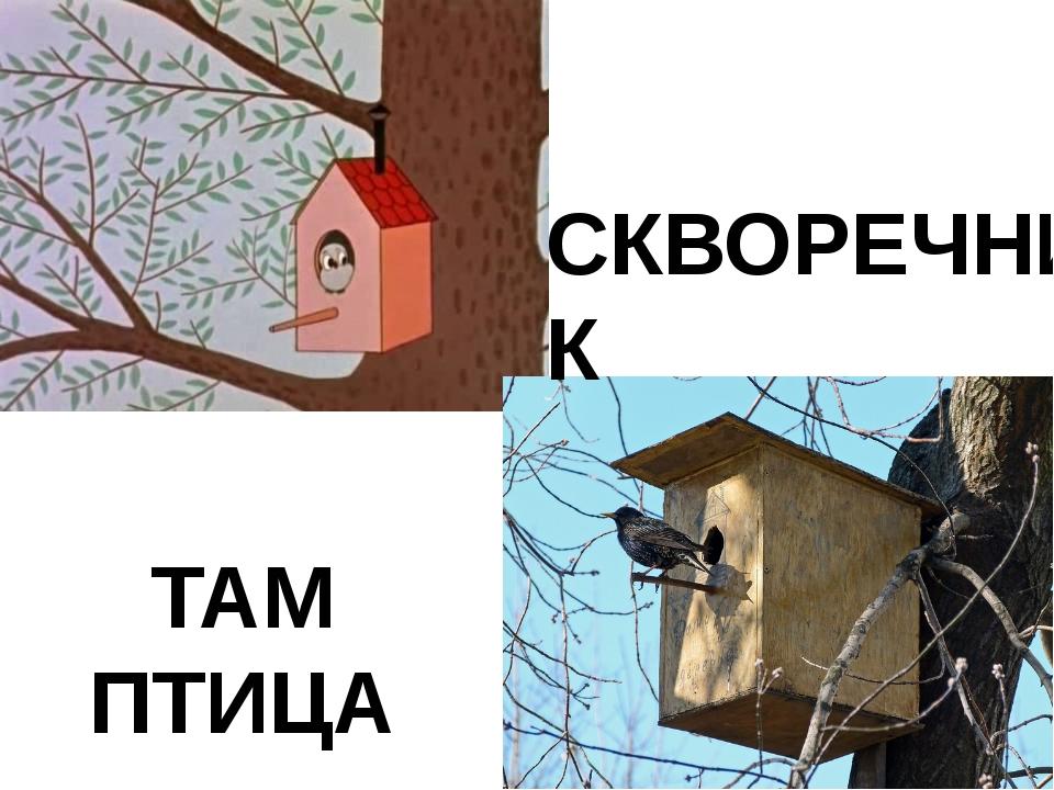 ТАМ ПТИЦА СКВОРЕЧНИК