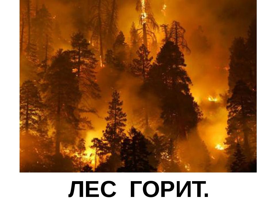 ЛЕС ГОРИТ. СТРАШНО.