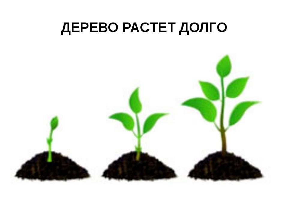 ДЕРЕВО РАСТЕТ ДОЛГО