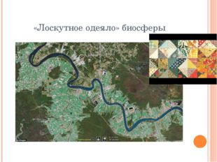 «Лоскутное одеяло» биосферы
