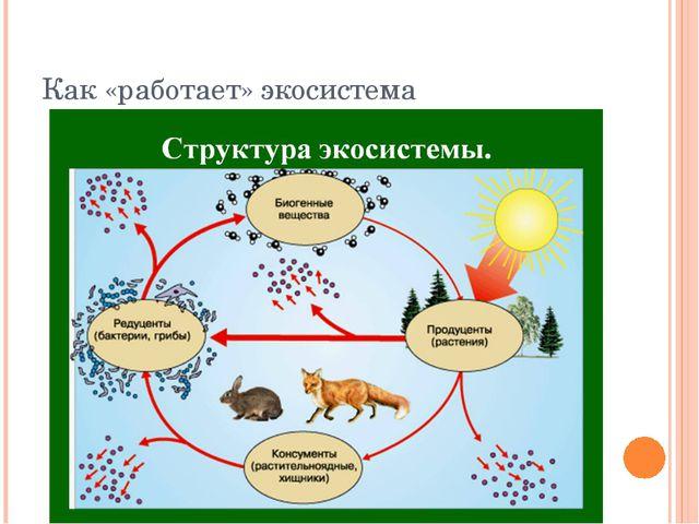 Как «работает» экосистема