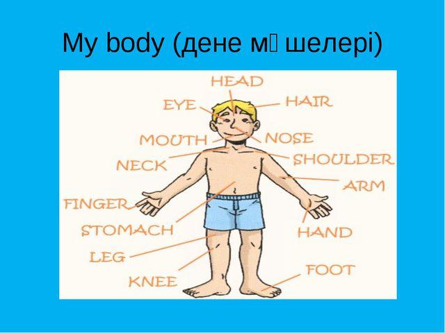 My body (дене мүшелері)