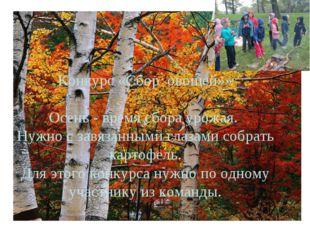 Конкурс «Сбор овощей»»  Осень - время сбора урожая. Нужно с завязанными глаз