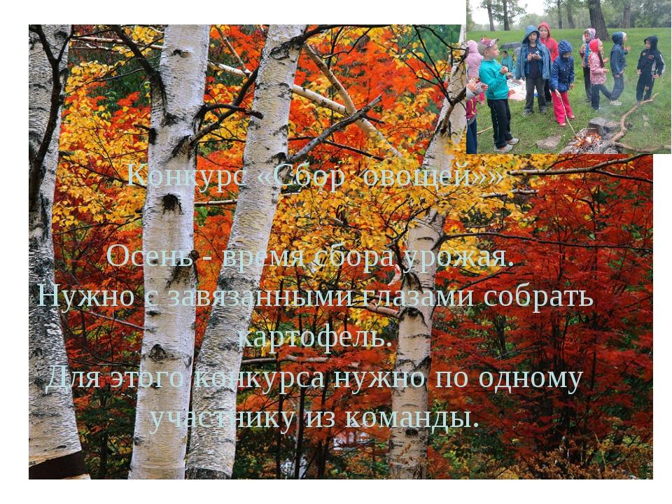 Конкурс «Сбор овощей»»  Осень - время сбора урожая. Нужно с завязанными глаз...