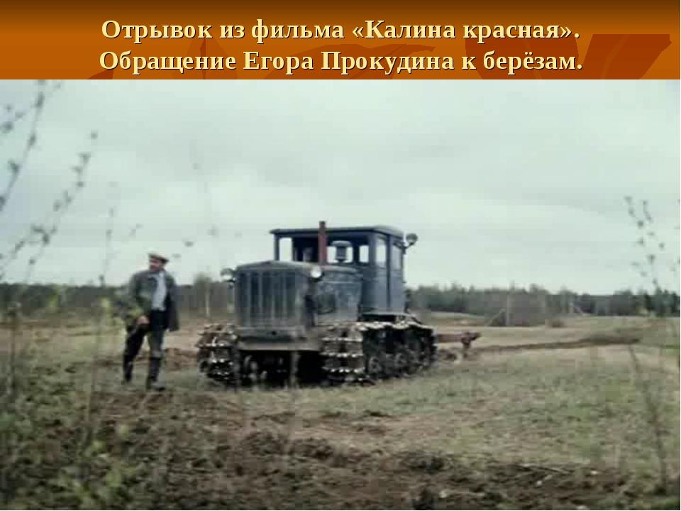 Отрывок из фильма «Калина красная». Обращение Егора Прокудина к берёзам.