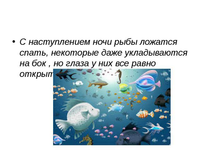 С наступлением ночи рыбы ложатся спать, некоторые даже укладываются на бок ,...