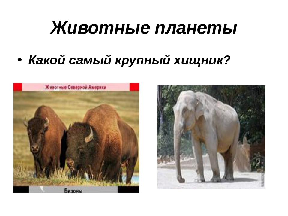 Животные планеты Какой самый крупный хищник?