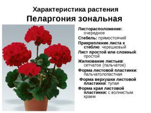 Характеристика растения Пеларгония зональная Листорасположение: очередное Сте