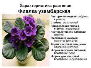 Характеристика растения Фиалка узамбарская Листорасположение: собраны в розет
