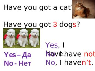 Have you got a cat? Have you got 3 dogs? Yes, I have. No, I have not. No, I h