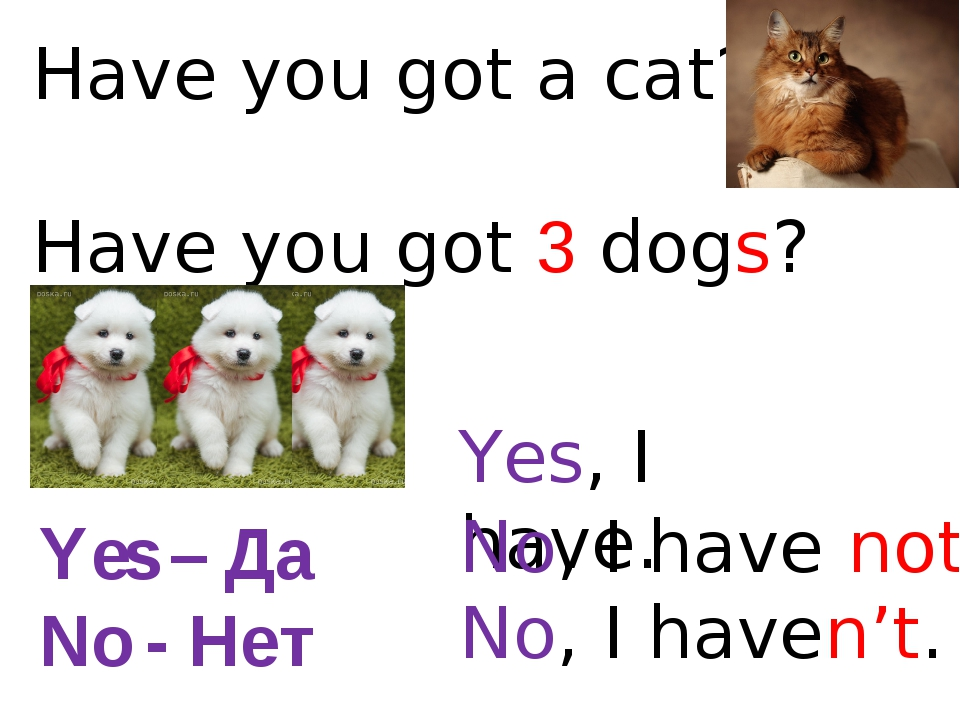 Have you got a cat? Have you got 3 dogs? Yes, I have. No, I have not. No, I h...