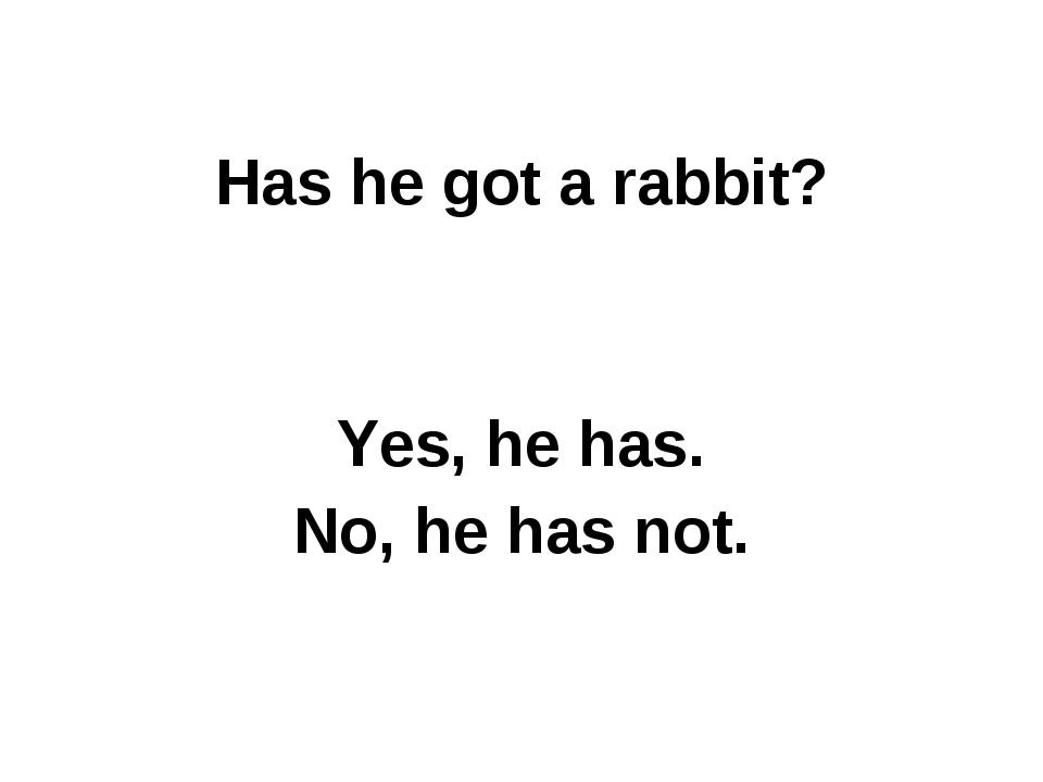 Has he got a rabbit? Yes, he has. No, he has not.
