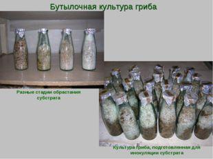 Бутылочная культура гриба Культура гриба, подготовленная для инокуляции субст