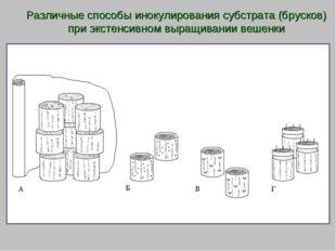 Различные способы инокулирования субстрата (брусков) при экстенсивном выращив