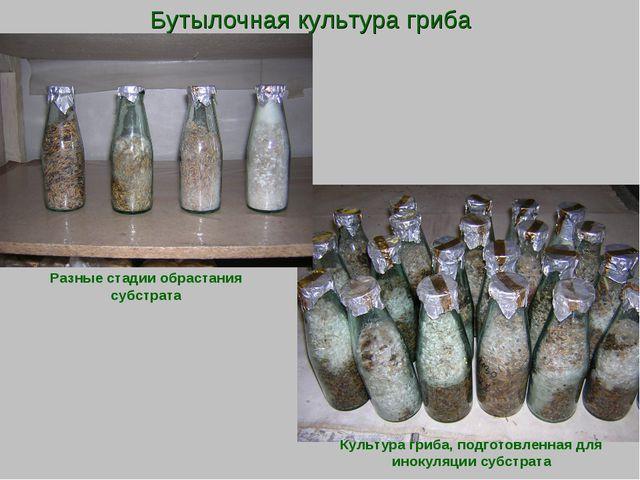Бутылочная культура гриба Культура гриба, подготовленная для инокуляции субст...