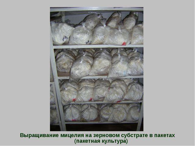 Выращивание мицелия на зерновом субстрате в пакетах (пакетная культура)