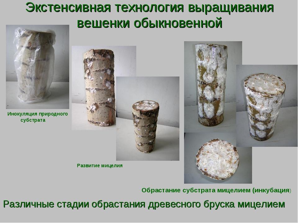 Обучение технологии выращивания грибов