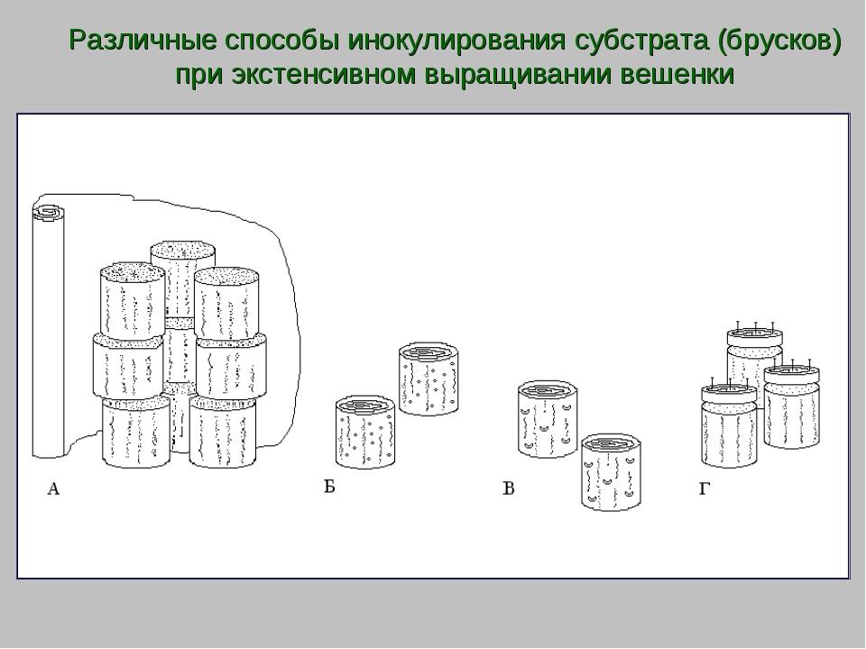 Различные способы инокулирования субстрата (брусков) при экстенсивном выращив...