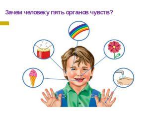 Зачем человеку пять органов чувств?