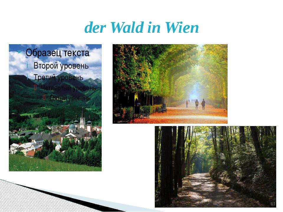 der Wald in Wien