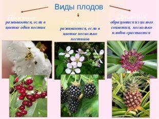 Бочкова И.А. Виды плодов Простые Сложные Соплодия развиваются, если в цветке