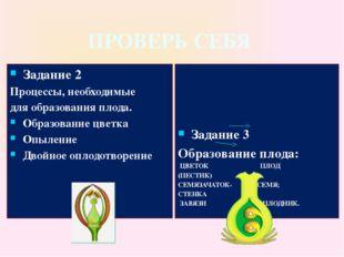 ПРОВЕРЬ СЕБЯ Задание 2 Процессы, необходимые для образования плода. Образован