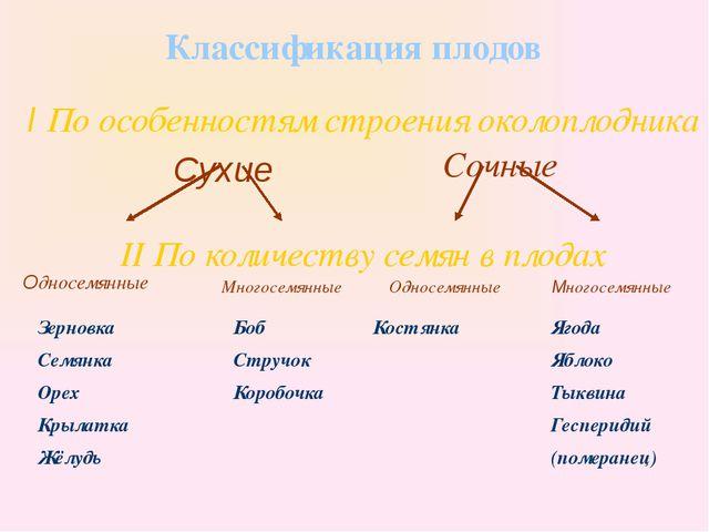 Классификация плодов I По особенностям строения околоплодника Сухие Сочные I...