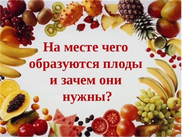На месте чего образуются плоды и зачем они нужны?
