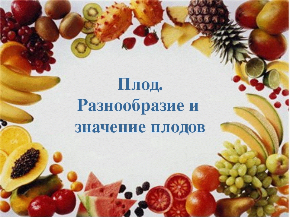 Плод. Разнообразие и значение плодов