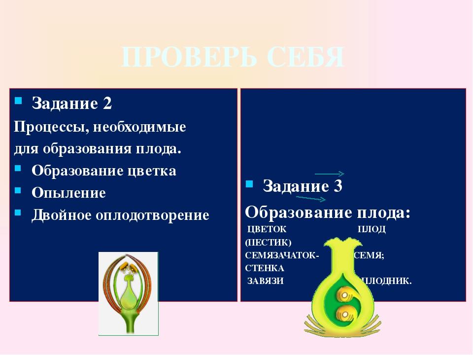 ПРОВЕРЬ СЕБЯ Задание 2 Процессы, необходимые для образования плода. Образован...