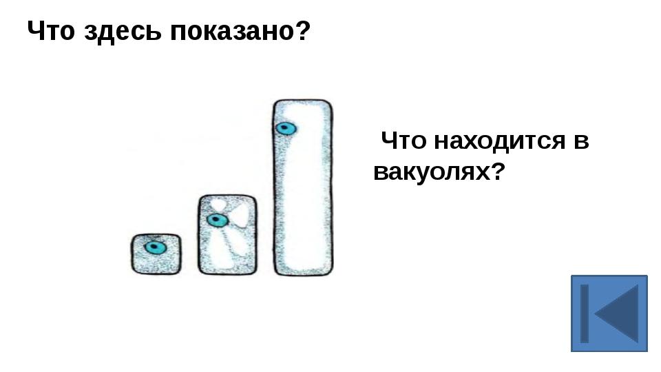 Строение клетки. Пластиды.