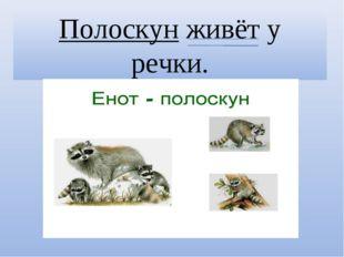 Полоскун живёт у речки.