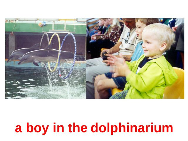 a boy in the dolphinarium