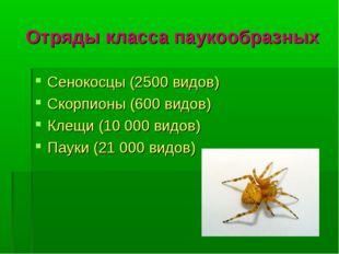 Отряды класса паукообразных Сенокосцы (2500 видов) Скорпионы (600 видов) Клещ