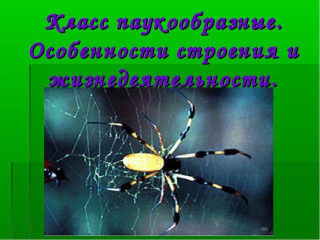 Класс паукообразные. Особенности строения и жизнедеятельности.