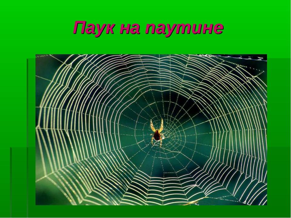 Паук на паутине