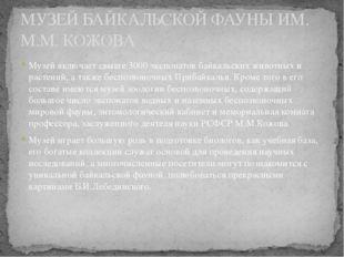 МУЗЕЙ БАЙКАЛЬСКОЙ ФАУНЫ ИМ. М.М. КОЖОВА Музей включает свыше 3000 экспонатов