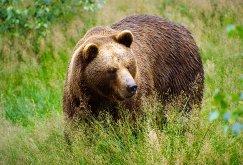 C:\Users\Дом\Downloads\медведь.jpg