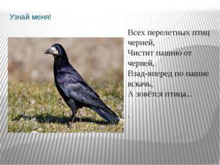 Узнай меня! Всех перелетных птиц черней, Чистит пашню от червей, Взад-впере