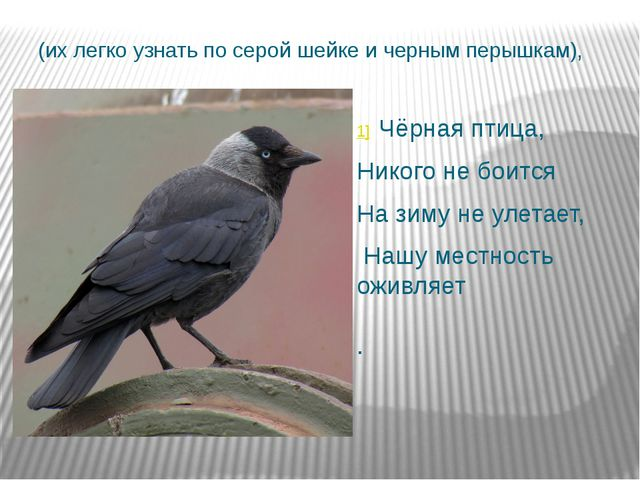 (их легко узнать по серой шейке и черным перышкам), 1] Чёрная птица, Никого...