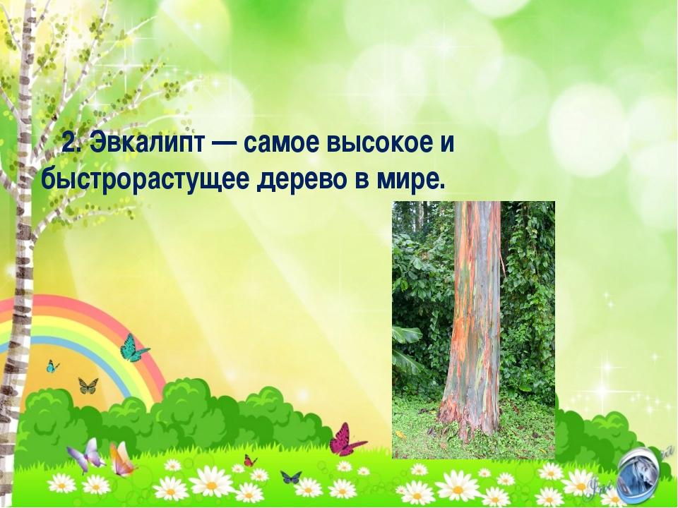2. Эвкалипт — самое высокое и быстрорастущее дерево в мире.
