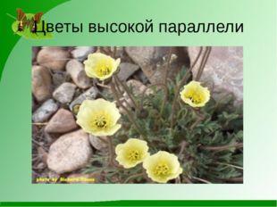 Цветы высокой параллели