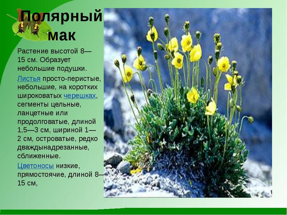 Полярный мак Растение высотой 8—15см. Образует небольшие подушки. Листьяпро...
