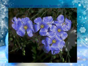 Лён—родрастенийсемействаЛьновые(Linaceae)