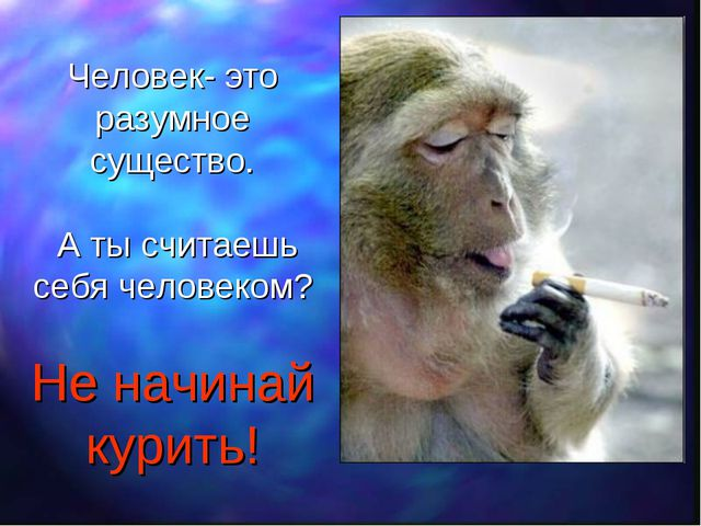 Человек- это разумное существо. А ты считаешь себя человеком? Не начинай кури...