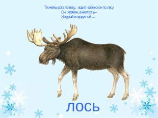 Тяжелы рога по весу, ходит важно он по лесу: Он хозяин, а не гость – Хмурый