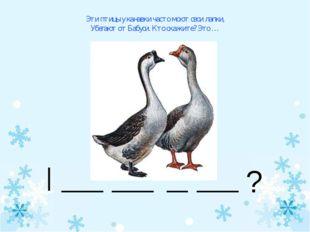 Эти птицы у канавки часто моют свои лапки, Убегают от Бабуси. Кто скажите? Эт