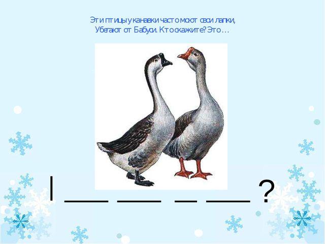 Эти птицы у канавки часто моют свои лапки, Убегают от Бабуси. Кто скажите? Эт...