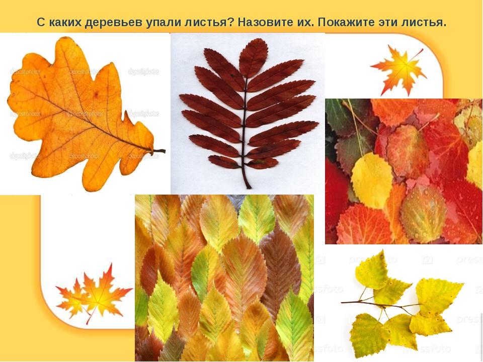 С каких деревьев упали листья? Назовите их. Покажите эти листья.